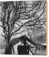 Tree-hut Wood Print