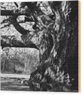 Tree I Wood Print