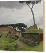 Tree In Ancient Rome Landscape Wood Print
