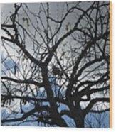 Tree In Benalmadena Wood Print