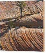 Tree In Flowing Rock Wood Print