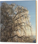 Tree In Ice Wood Print