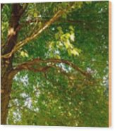 Tree In Late Summer Wood Print