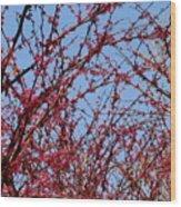 Tree In Pink Wood Print
