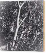 Tree In Summer In Black And White Wood Print