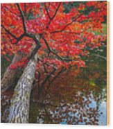 Tree In The Pond Wood Print