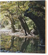 Tree In The River Wood Print
