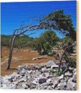 Tree In Tulum Wood Print