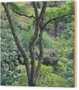 Tree Japanese Garden Wood Print