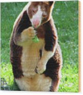 Tree Kangaroo Wood Print