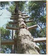 Tree Ladder Wood Print