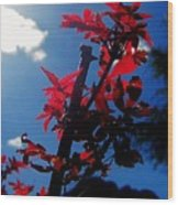 Tree Leaves Red 061814a Wood Print