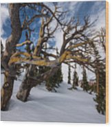 Tree Life In Winter Wood Print