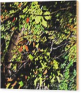 Tree Light Wood Print
