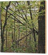 Tree Limbs Wood Print