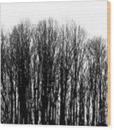 Tree Lined Wood Print