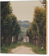 Tree Lined Pathway In Lyon France Wood Print