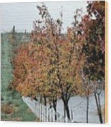 Tree Lined Road Wood Print