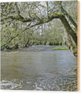 Tree-lined - Swollen River Dove At Thorpe Wood Print