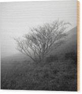Tree Mist Wood Print