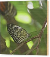Tree Nymph Butterfly Sitting On A Tree Branch Wood Print