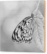 Tree Nymph - Light Wood Print