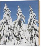 Tree-o Of Evergreens Wood Print