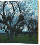 Tree Of Art Wood Print
