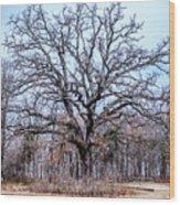 Tree Of Beauty Wood Print