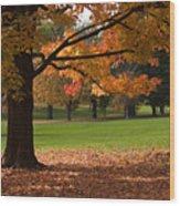 Tree Of Fall Autumn Colors Wood Print
