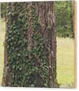 Tree Of Ivy Wood Print