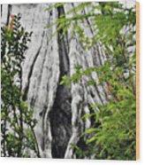 Tree Of Life - Duncan Memorial Big Western Red Cedar Wood Print by Christine Till