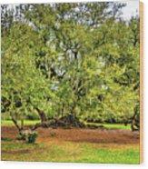 Tree Of Life 2 - Paint  Wood Print