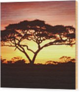 Tree Of Life Africa Wood Print