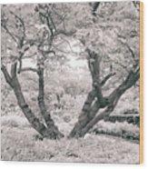 Tree Of Life II Wood Print
