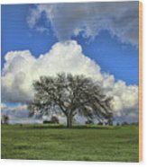 Tree Of Life Style Oak Tree And Coluds Wood Print