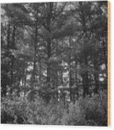 Tree Of Peace Wood Print