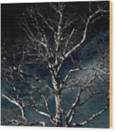 Tree Of Solitude Wood Print
