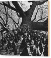 Tree Of Thorns B Wood Print