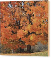 Tree On Fire Wood Print