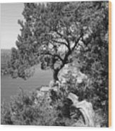Tree On Mount Bonnell Wood Print