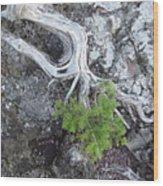 Tree On Rock Wood Print