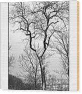 Tree On The Western Promenade Wood Print