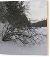 Tree Over Frozen Lake Wood Print by Richard Mitchell