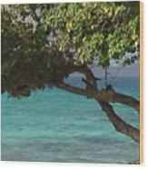 Tree Over Sapphire Beach Wood Print