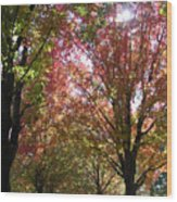 Tree Pathway Wood Print