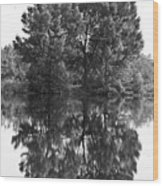 Tree Reflection In Black And White Wood Print