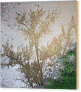 Tree Reflection Upside Down 1 Wood Print