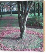 Tree Ring Wood Print