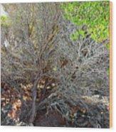 Tree Rock And Life Wood Print